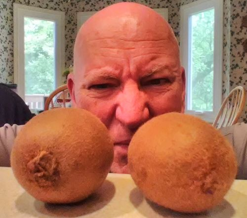 Chrome Dome Mike putting the stink eye on a couple kiwi fruit which are sitting on his counter top in Louisville, Kentucky.