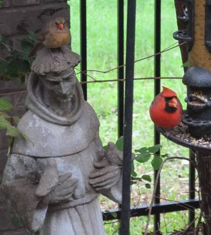 Photos of cardinals and St. Francis of Assisi which were taken in the town of Lakeway, Texas in the Hill Country of Texas just Northwest of Austin, near Lake Travis.