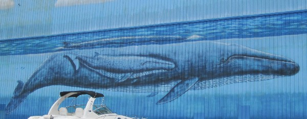 Painting of whales on the walls of the Legendary Marina in Destin, FL which services the Chactowhatchee Bay and Gulf of Mexico.