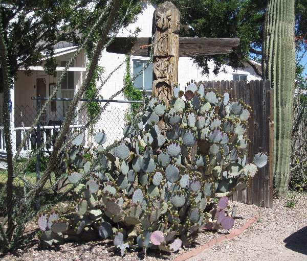 Photo of a prickly pear and saguaro cacti taken on Fremont Street in Tombstone, Arizona.  While adding character to the scene, the Native American totem pole does seem to be a little out of place.